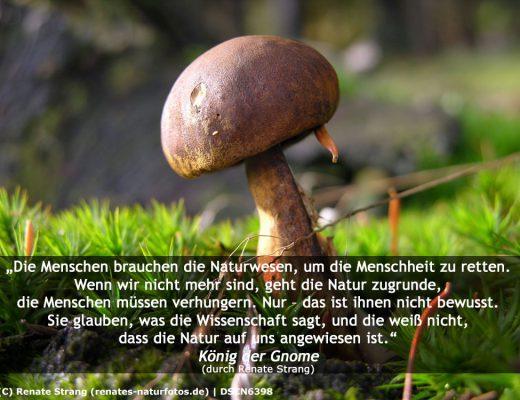 Zitat der Gnome
